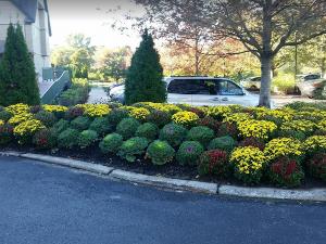 flower plantings